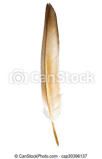Feather pen - csp30396137
