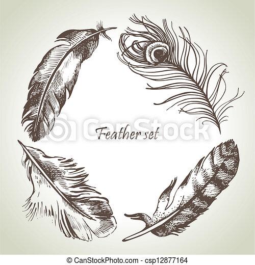 Feather set. Hand drawn illustrations  - csp12877164