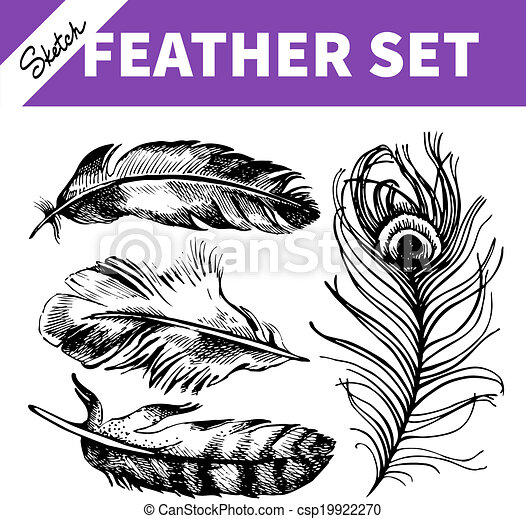 Feather set. Hand drawn sketch  illustrations  - csp19922270