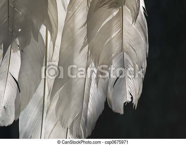 feathers - csp0675971