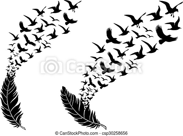 feathers with flying birds, vector - csp30258656
