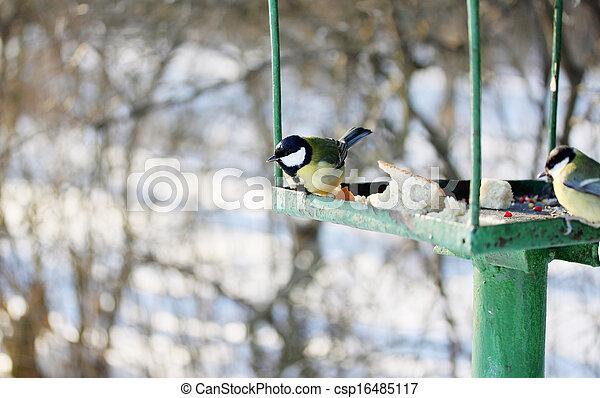 Feeder for wild birds - csp16485117