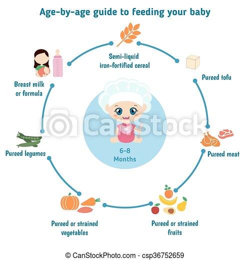 feeding baby infographics baby child infographic presentation rh canstockphoto com Baby Gerber Feeding Guide Newborn Baby Feeding Guide