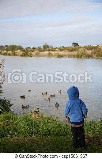 Feeding ducks. - csp15061367