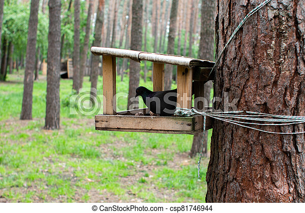 feeding trough in the forest with a dove on a tree - csp81746944