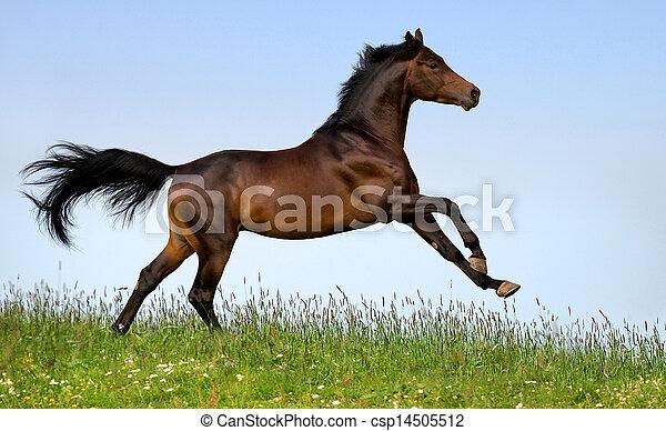 Bay Horse läuft im Feld - csp14505512
