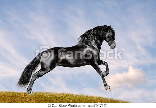 feld, pferd, schwarz - csp7947121