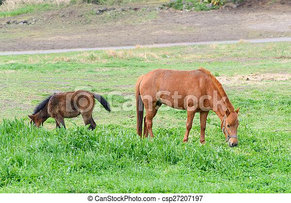 Ponies auf einem Feld - csp27207197
