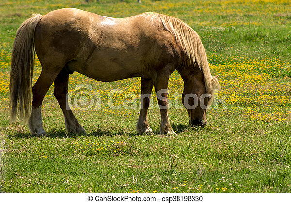 feld, weiden, rotes pferd - csp38198330