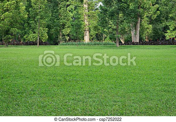 Grasfeld und Bäume - csp7252022