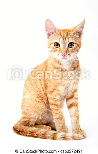 feline portrait - csp0372491