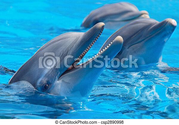 feliz, golfinhos - csp2890998