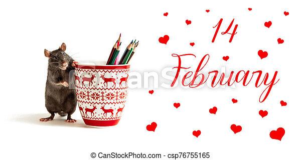 feliz, valentino, negro, jarras, rojo, coloreado, rata, corazones, lápices, día, inscripción, estantes - csp76755165