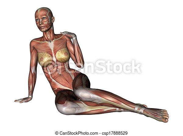 Female anatomy figure. 3d digital render of a sitting female anatomy ...