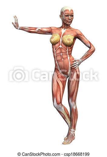 Female anatomy figure. 3d digital render of a female anatomy figure ...