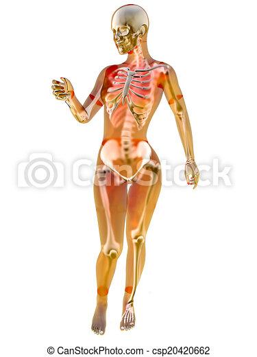 Female Anatomy Female Anatomy Visualisation 3d Illustration