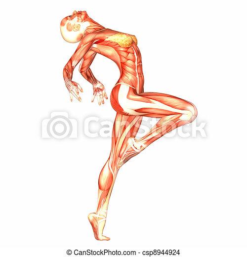 Female Body Anatomy Illustration Of The Anatomy Of The Female Body