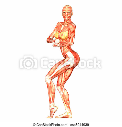 Female Body Anatomy Illustration Of The Anatomy Of The Stock
