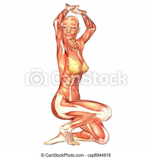 Female body anatomy. Illustration of the anatomy of the female body ...