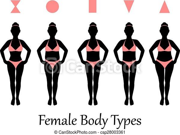 female body types - csp28003361