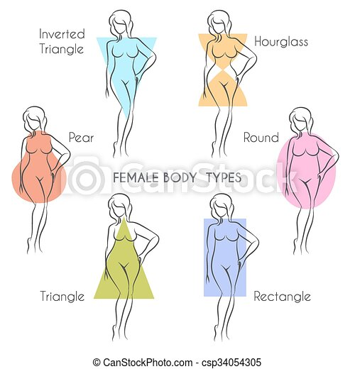 154a26be9 Female body types. Female body types anatomy. main woman figure ...