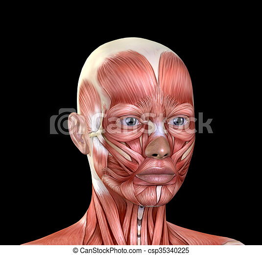 Female Face Muscles Anatomy Isolated On Black Background