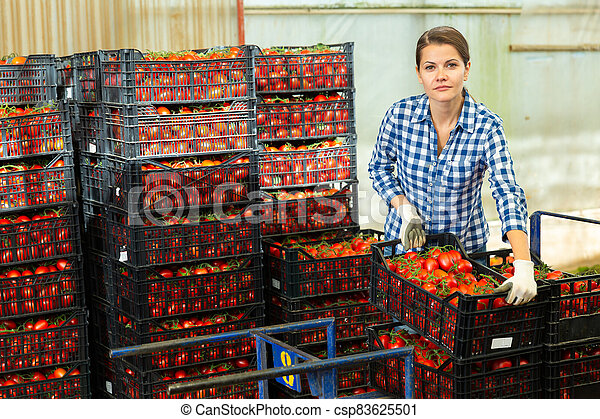 Female farmer arranging crates with harvested tomatoes - csp83625501
