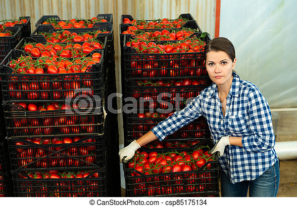Female farmer arranging crates with harvested tomatoes - csp85175134