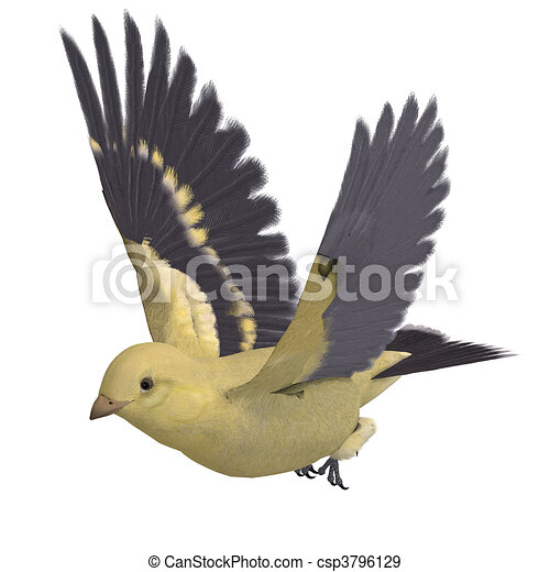Female Goldfinch.  3D rendering and shadow over white - csp3796129