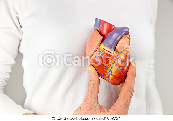 Female hand holding heart model in front of chest - csp31002734