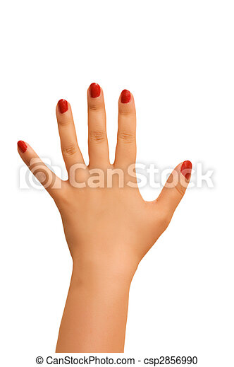Female hand isolated on the white background - csp2856990