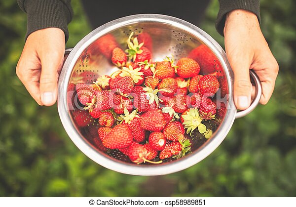Female hands holding freshly picked strawberries - csp58989851