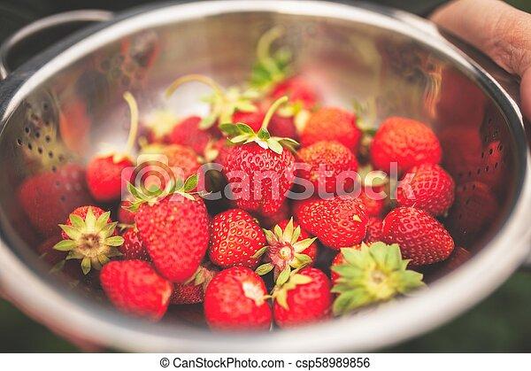 Female hands holding freshly picked strawberries - csp58989856