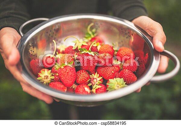 Female hands holding freshly picked strawberries - csp58834195