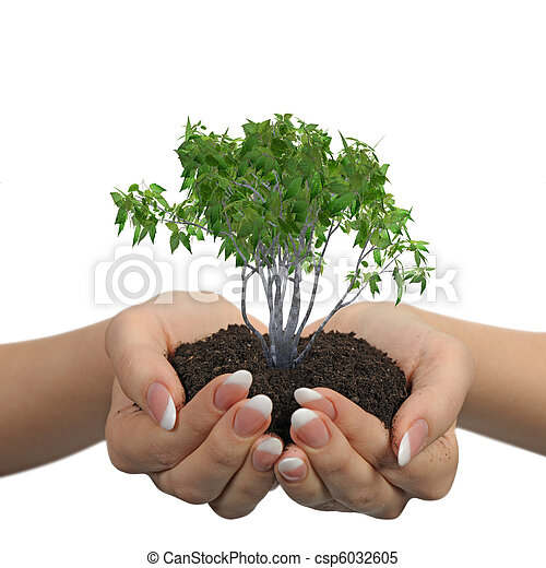 Female hands with soil and a plant - csp6032605