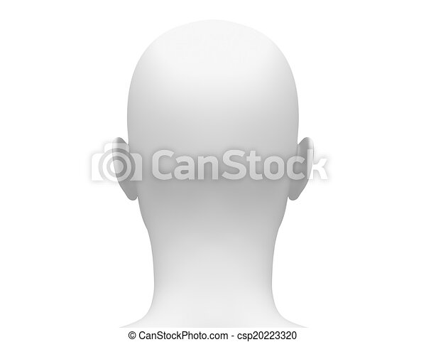 Female Head Muscles Anatomy Back View