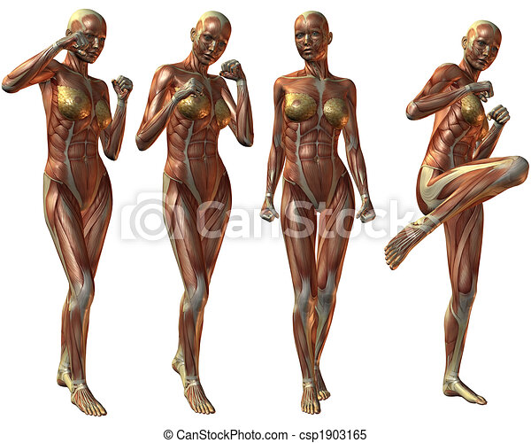 3d render of an female human body anatomy.