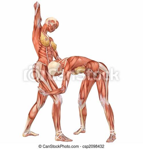 Female human body anatomy street fight 3d computer render