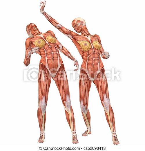 Female human body anatomy-street fight. 3d computer render .