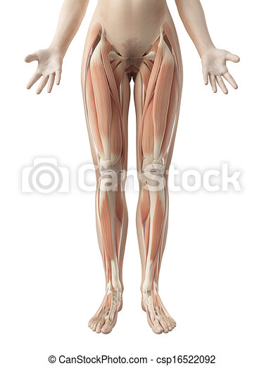 Female leg muscles - csp16522092