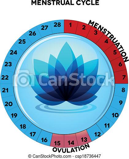 Female menstrual cycle chart menstrual cycle chart average twenty