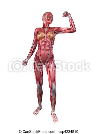 Female Muscular System 3d Rendered Illustration Of A Stock