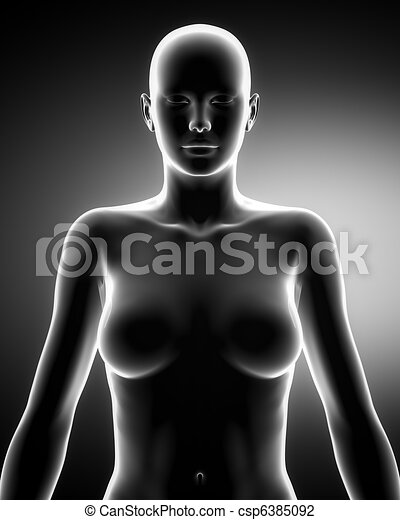 Female torso in anatomical position anteriror view - csp6385092