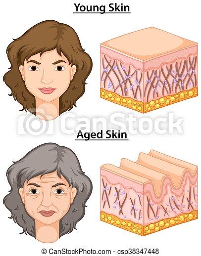 femme, vieilli, jeune, peau - csp38347448