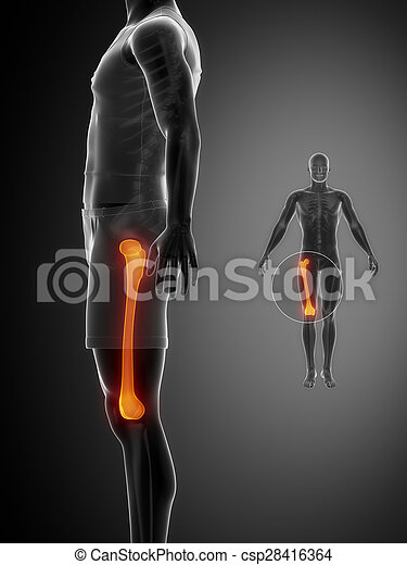 FEMUR black x--ray bone scan - csp28416364