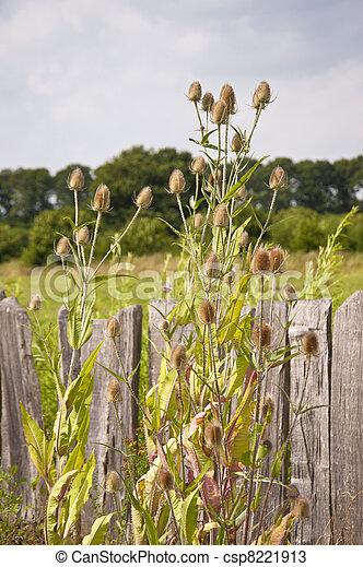 Fence - csp8221913