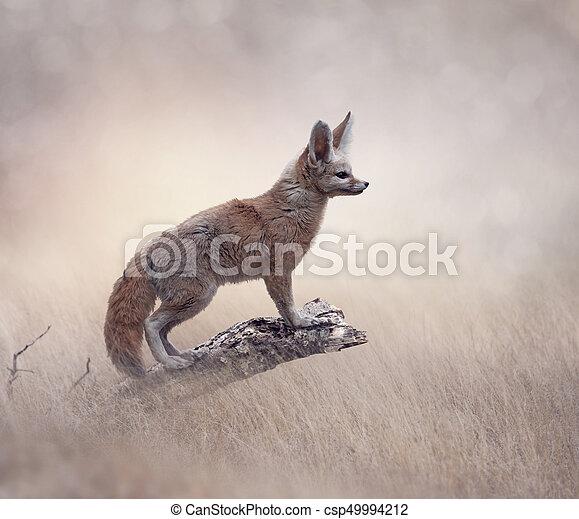 Fennec Fox on a tree - csp49994212