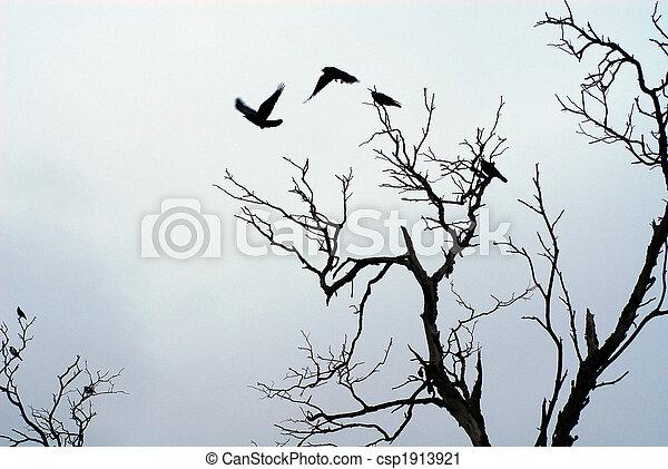 fermé, voler, ombre, oiseaux - csp1913921
