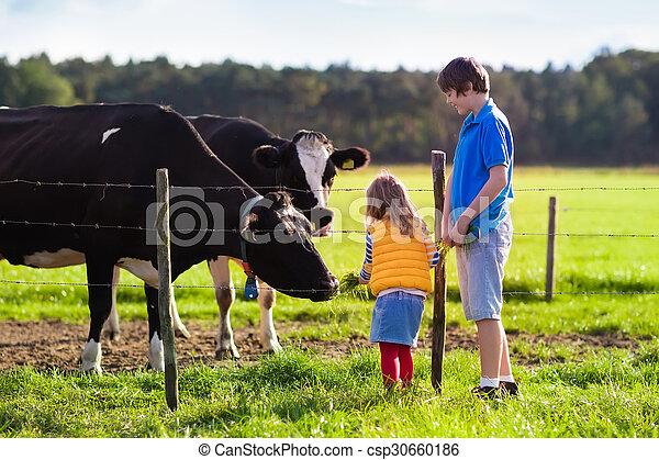 ferme, alimentation, vache, gosses - csp30660186