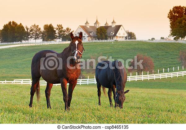 ferme, cheval - csp8465135